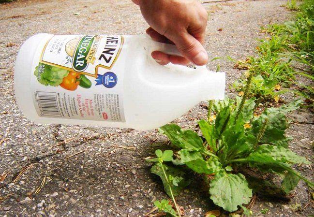 La mejor manera de fertilizar nuestro jardín